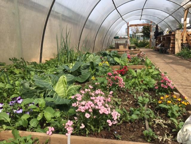 horticulture at CDCFE